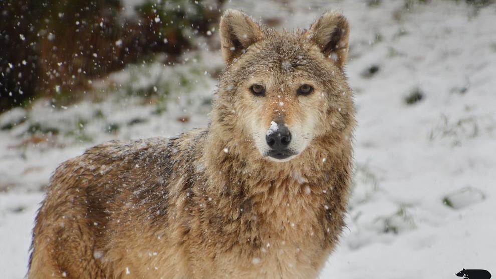 Ők a Budakeszi Vadaspark sztárjai: szavazás döntött a hónap állatáról