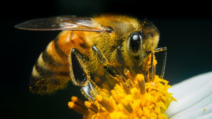 Meglepő dolog derült ki a méhekről: ezen múlik, milyen mézet lehet majd kapni a boltokban