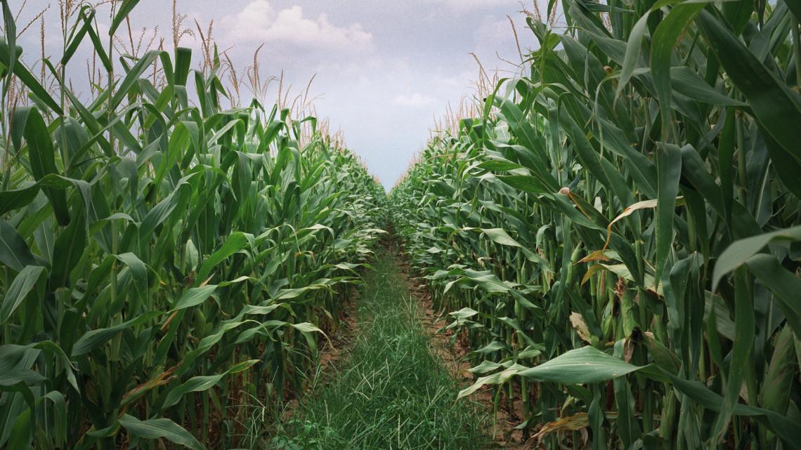 Ez a jövő: egyre jobban nő a bankok szerepe az agrárfinanszírozásban