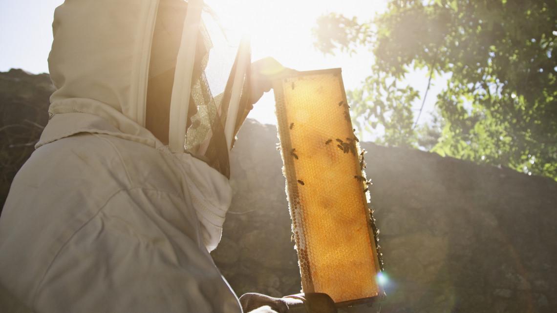 Ez mentheti meg a méhészeket: ha tönkremennek, csúnya világ jön