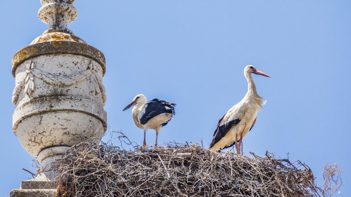 Hihetünk a szemünknek: idén korábban érkezhetnek a gólyák