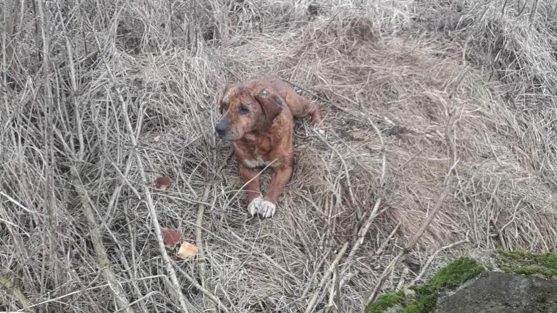 Kútba esett kutyát mentettek Tiszalökön: 10 méter mélyről nyüszített