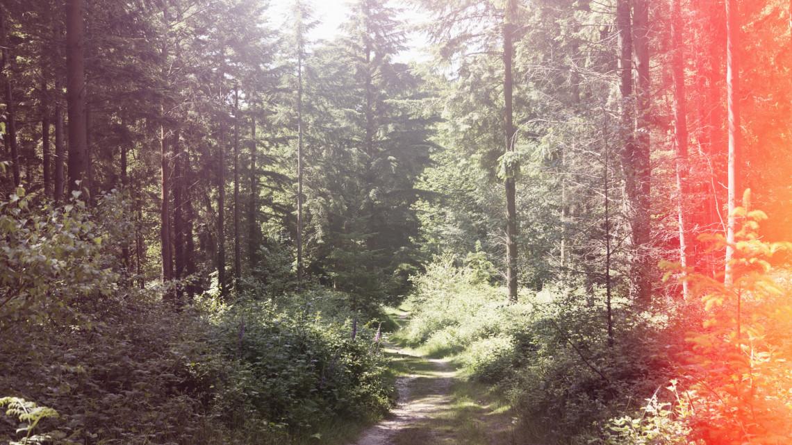 Húszéves tanösvényt újítottak fel Debrecenben: 5 milliót szánt rá az erdészet