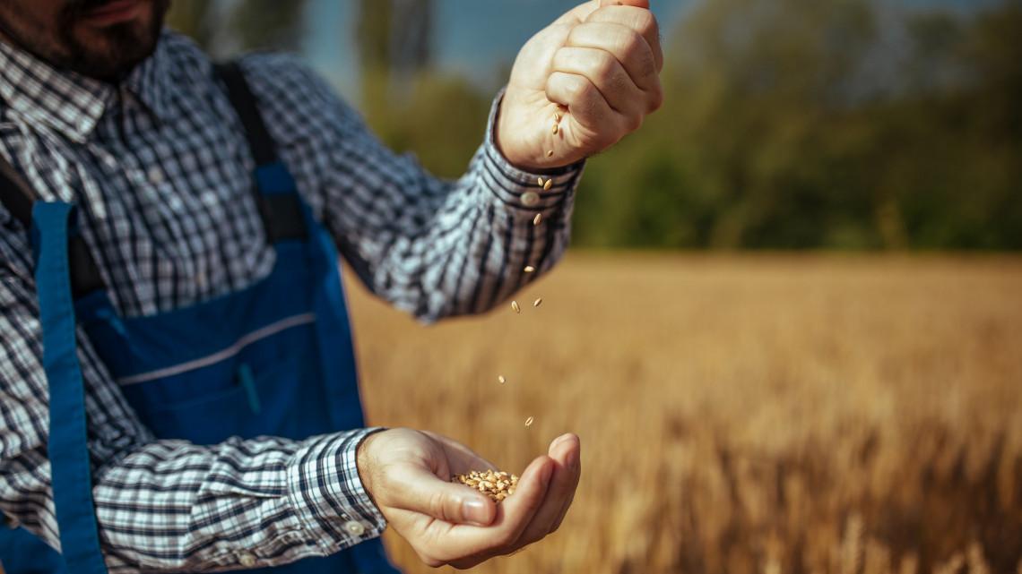 Újabb csapást a mezőgazdaságra: nehezíti a szárazság az őszi vetést