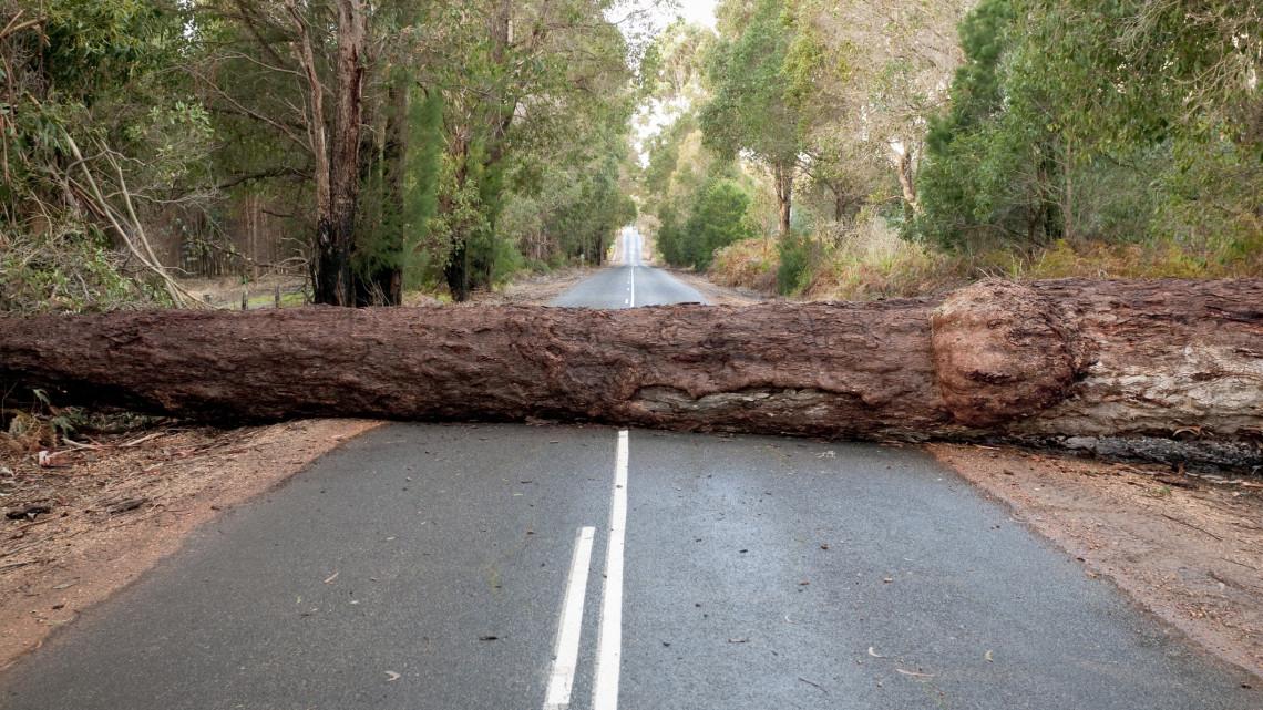Nem kímélte az időjárás Borsod megyét: fák dőltek ki, vezetékek szakadtak le
