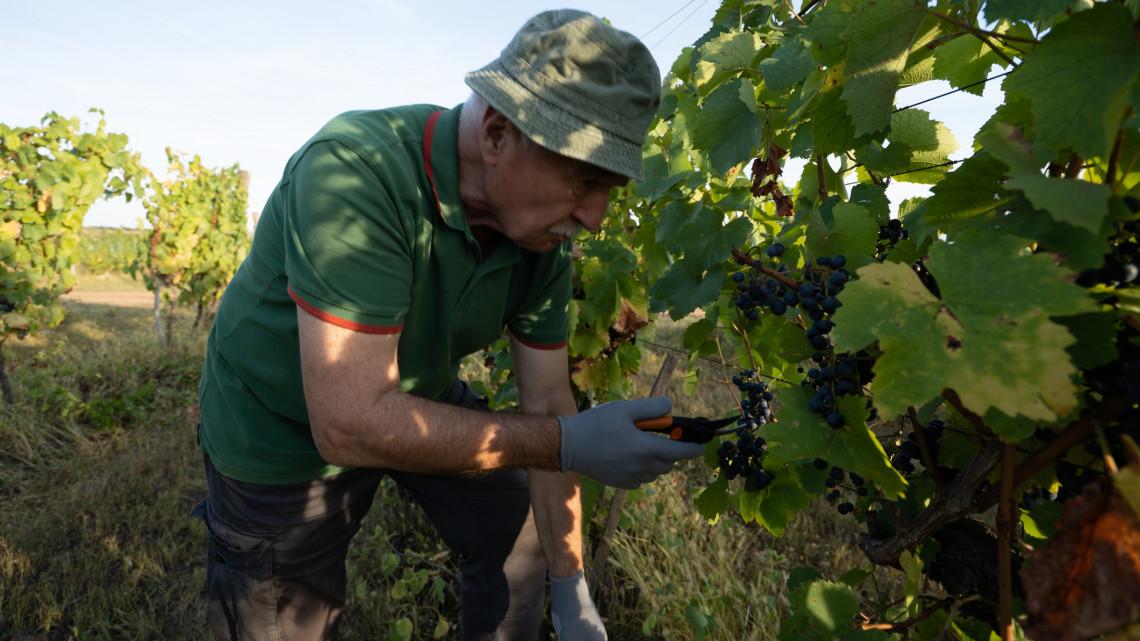 Ijesztő lények lepték el a magyar dűlőket: veszélyben a borászatok?