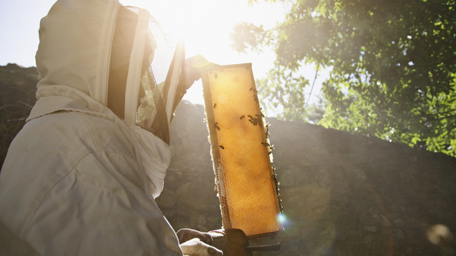 Aggódnak a méhészek: megtorpant a mézpiac