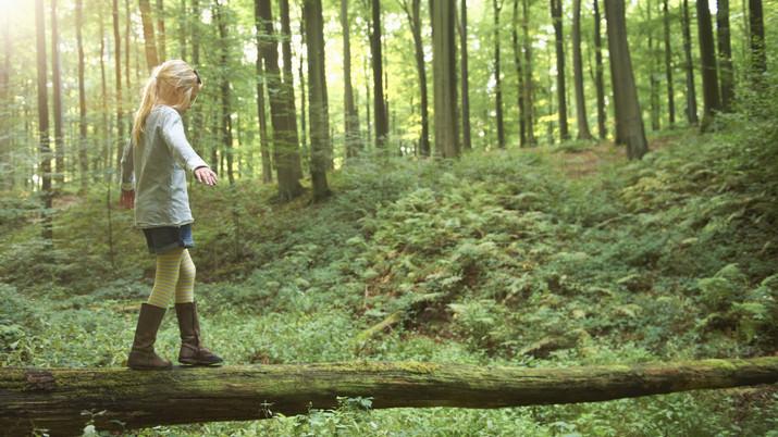 Fókuszban a magyar erdők: újabb támogatásokkal ösztönöznek a fásításra