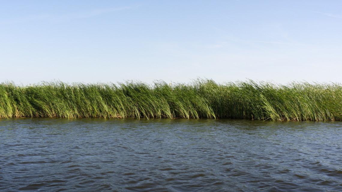 Illegális nádirtók pusztítanak a Balaton partján: komoly veszélyben a tó