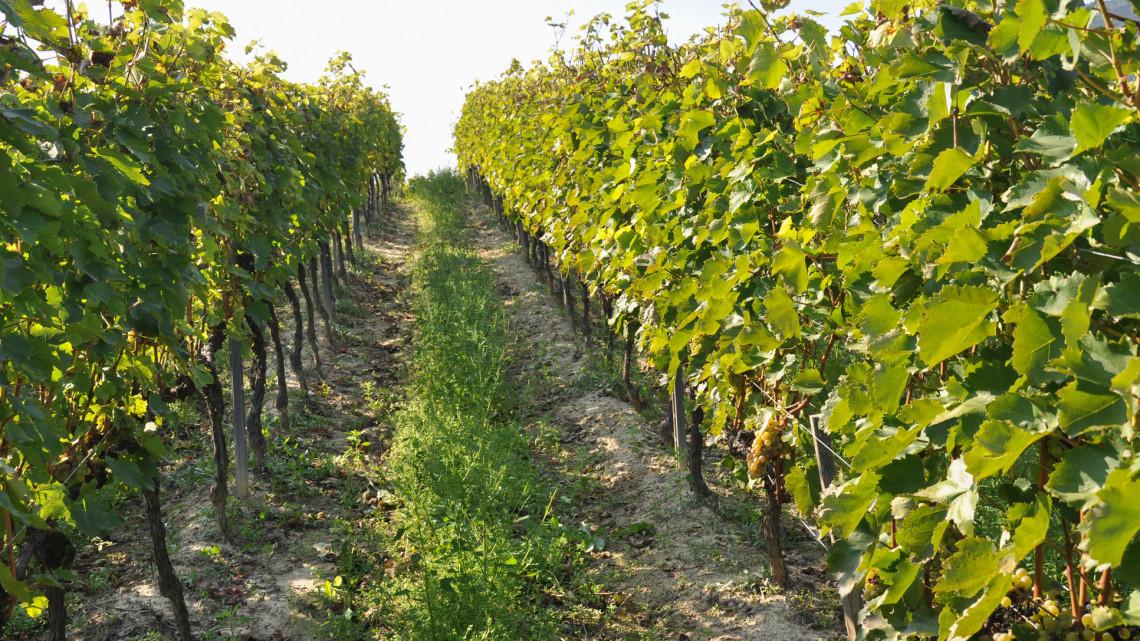 Elárulta a magyar csúcsborász, kiknek futja a 12 milliós borkülönlegességre