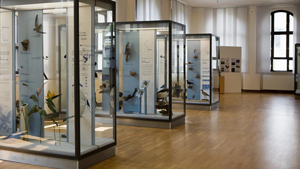 Mégsem Debrecen a célpont? Bonyolódik a múzeum költöztetése