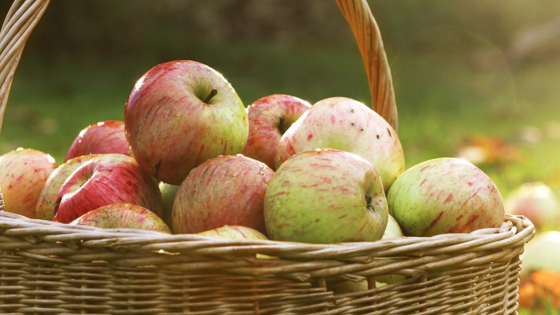 Durván kevesebb gyümölcs termett tavaly: ez az oka a visszaesésnek