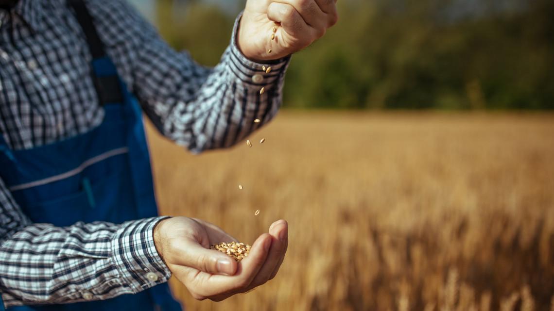 Segítség kell a gazdáknak: erre számíthatnak az agrárpiaci válsághelyzetben