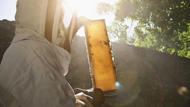 Gazdák, figyelem: eddig lehet jelentkezni a méhegészségügyi támogatásra