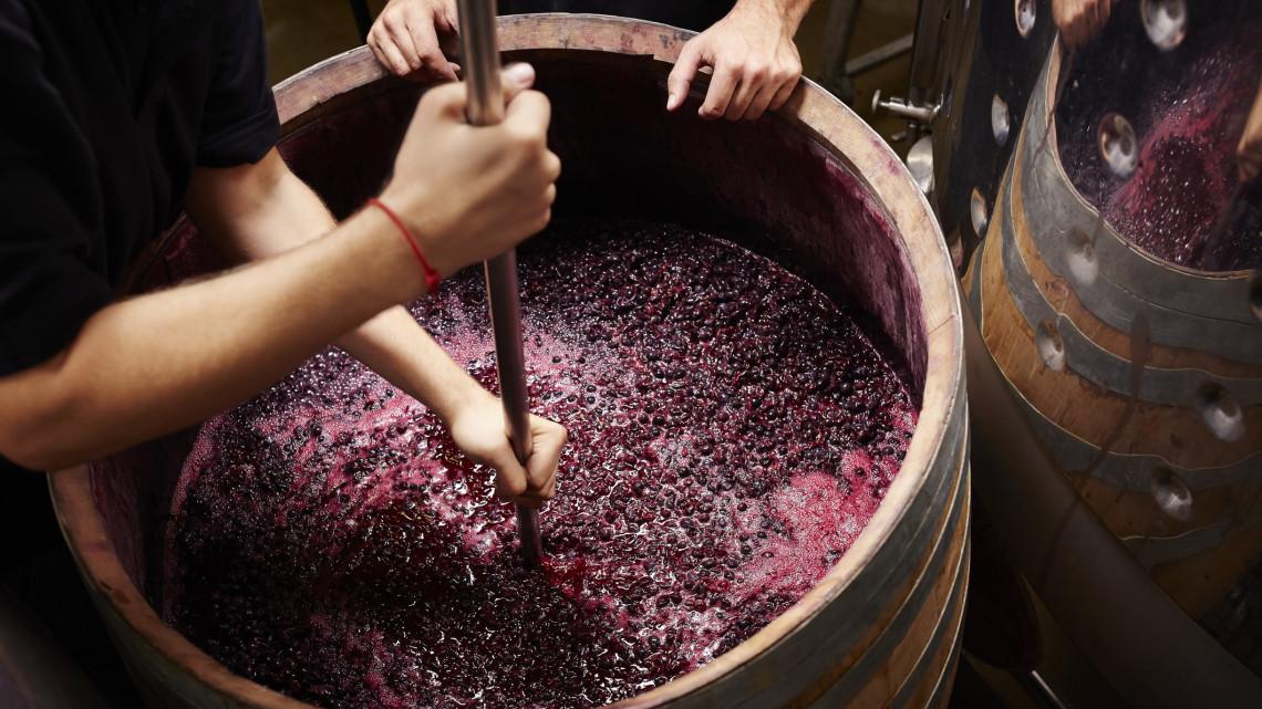 Így fejlődhet a borágazat: új törvénnyel kell rendet tenni