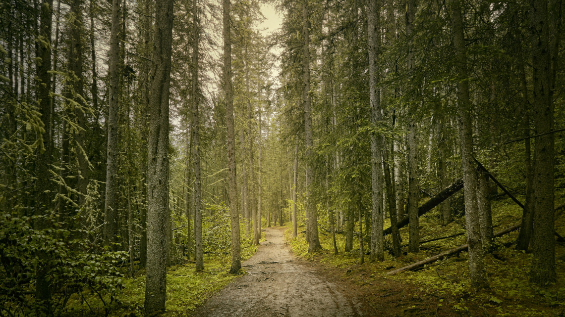 Harc a klímaváltozás ellen: milliárdokért telepítenek új erdőket