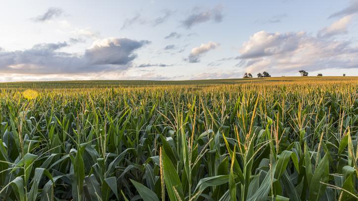 Indul a földértékesítési program: most kell lecsapni a legjobb területekre