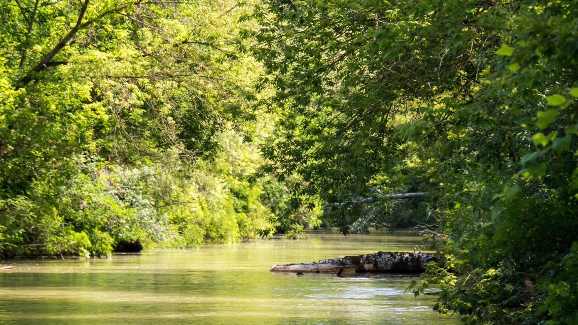 Özönlik a szemét és a káros anyag a vizeinkbe: csúnya világ jön, ha így megy tovább