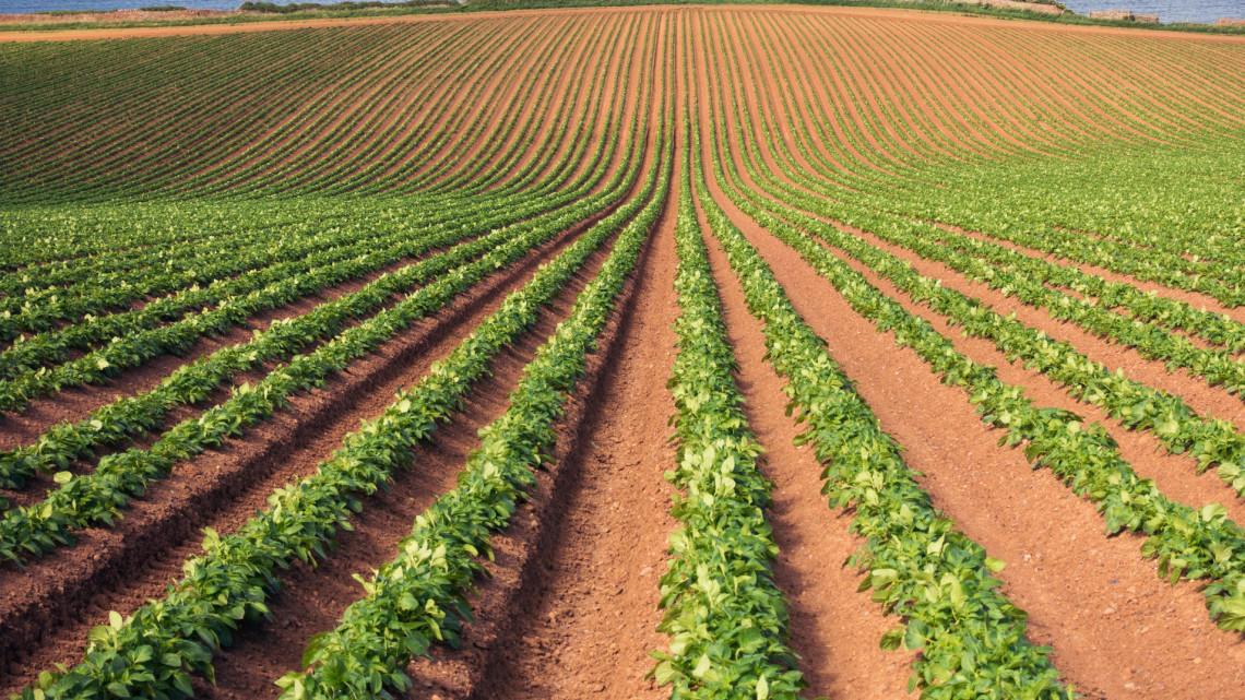 Hatalmas a potenciál a kertészeti ágazatban: fejlesztik is nagy erőkkel