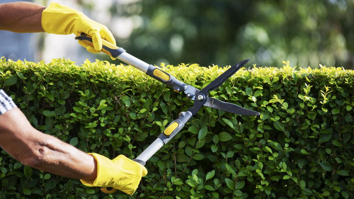Ezek a legfontosabb kora tavaszi kerti munkák: itt a márciusi feladatlista