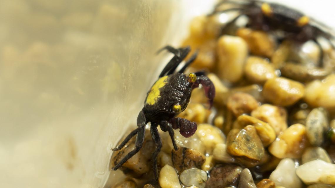 Egyedülálló gyűjtemény: különleges állatokkal találkozhatsz a Debreceni Állatkertben
