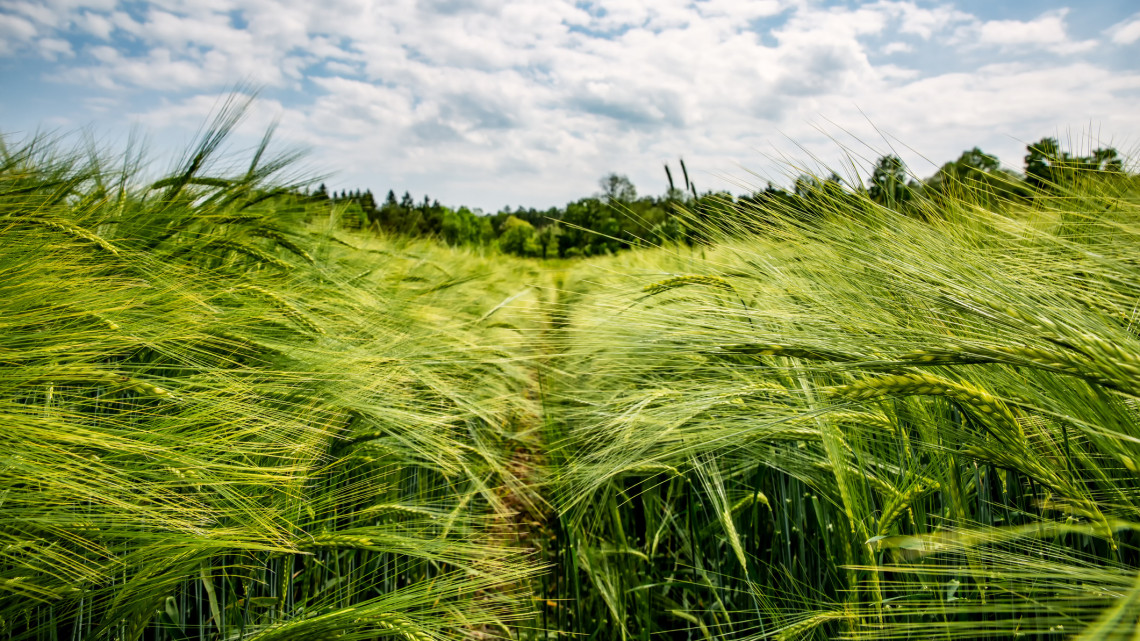 Kiderült: új korszak kezdődik a magyar agráriumban