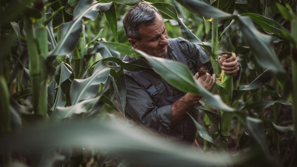 Hatalmas segítség lehet a gazdáknak: a könyv, ami felkészít a jövőre