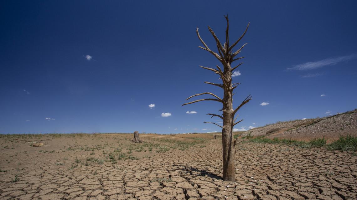 Ezt már nem lehet letagadni: íme a természet válasza a korán jött tavaszra