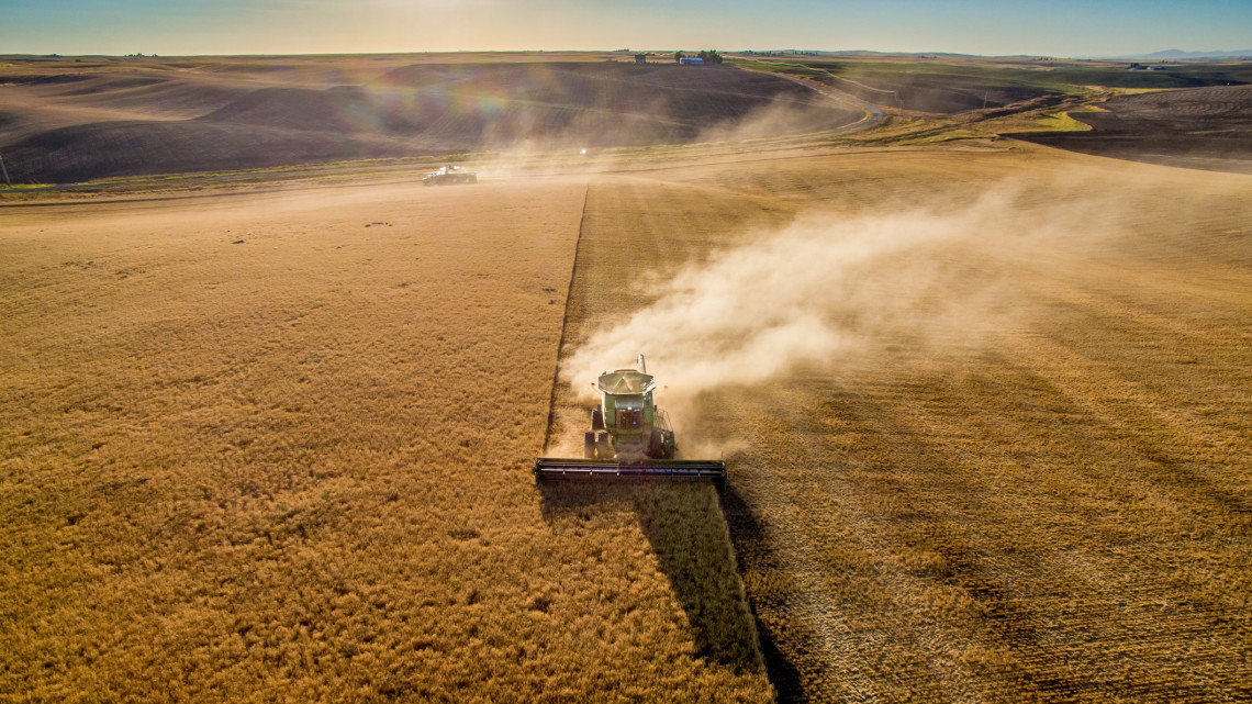 Milliárdokat csalt el a gabonakereskedő cég: közel kétszáz sértettnek okoztak kárt