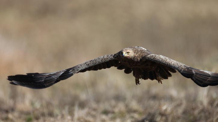 Különleges állat bukkant fel a Kígyósi-pusztán: ilyen madarat ritkán látni