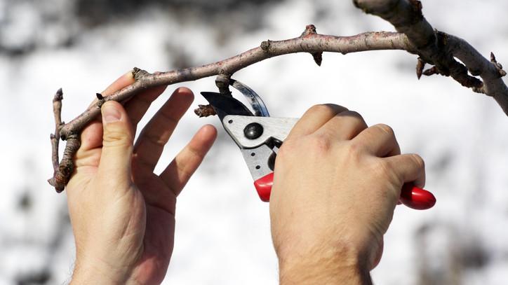 Óvatosan a metszéssel: még számíthatunk nagyobb lehűlésekre