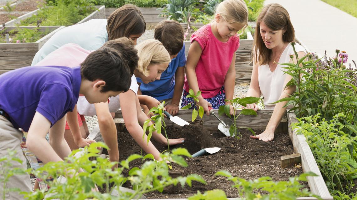 Kertekre pályázhatnak a diákok: így tesznek a Földért