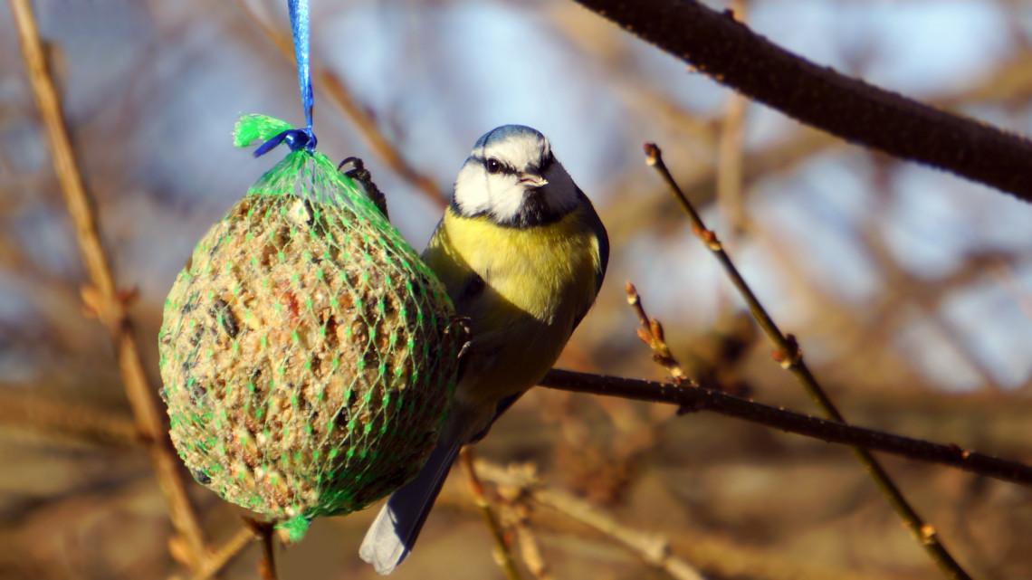 Drámaian fogy a madárállomány: mi is hibázhatunk, ha korán befejezzük az etetést