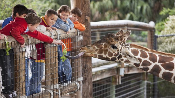 Állatkertbe mennél? Így változnak a látogatási szabályok
