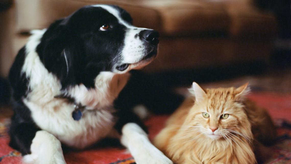 Koronavírus: ezt mindenképpen tedd meg, ha háziállatod van