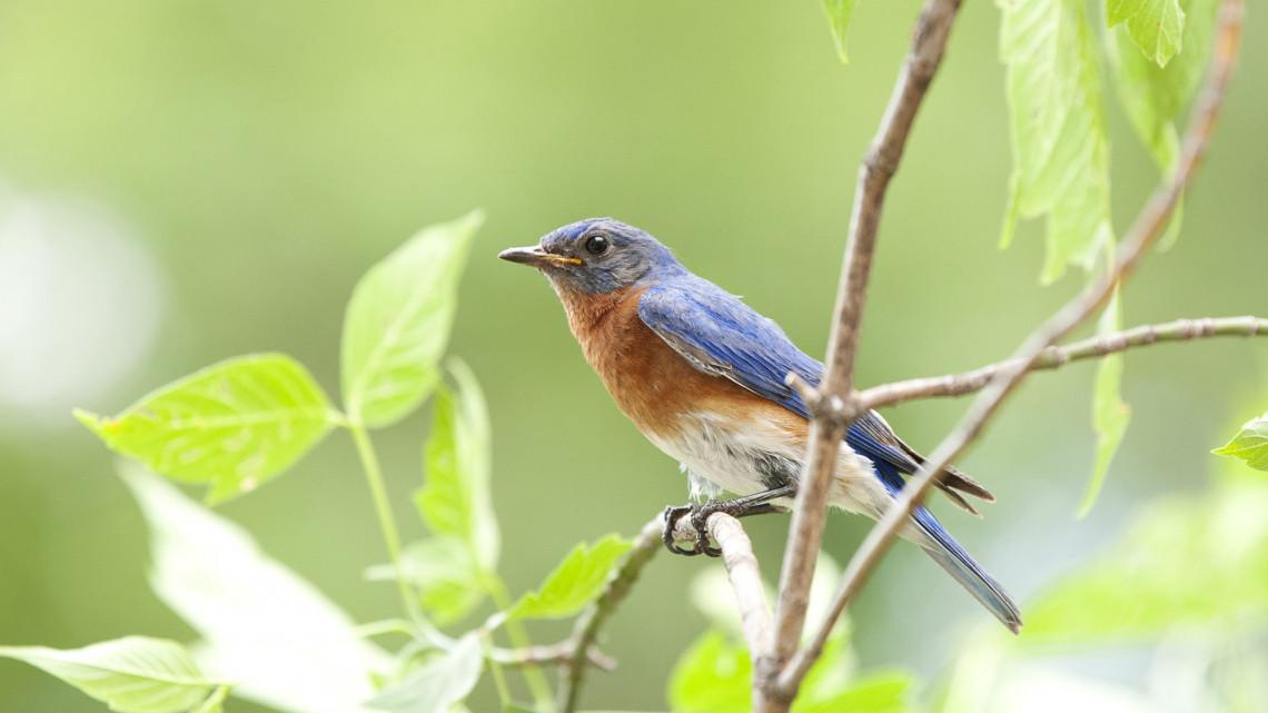 Országszerte várják a madárbarátokat: adatgyűjtéshez kérik a lakosság segítségét