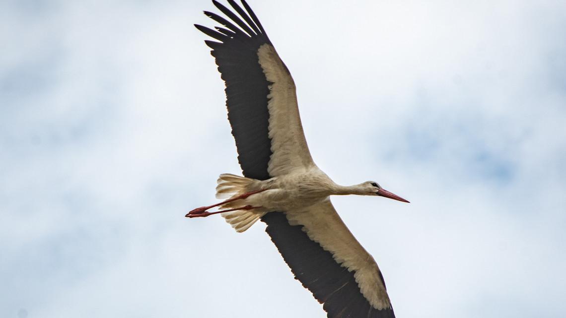 Szabadok lettek: kokárdás gólyákat eresztettek szélnek Hortobágyon