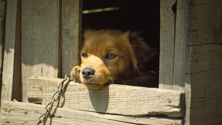 Vádat emelt az ügyészség: börtön várhat a nógrádi állatkínzóra