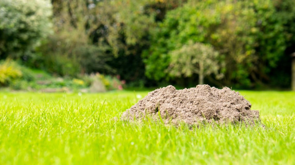 Vakondriasztó házilag: így tartsd távol idén a vakondokat a kertedből!