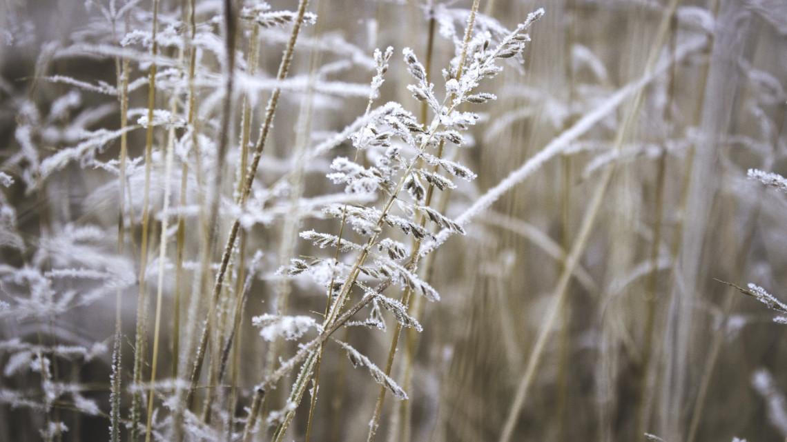 Nem árt a havazás a növényeknek: csökkentheti a kártveők számát a tavaszi fagy