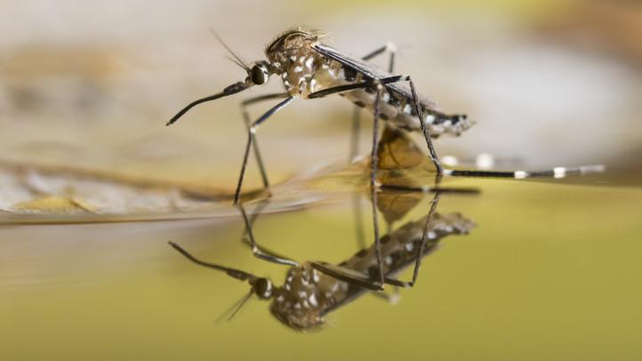 Készülnek a szúnyoginvázióra: feltérképezik a tenyészőhelyeket a Tisza-tónál