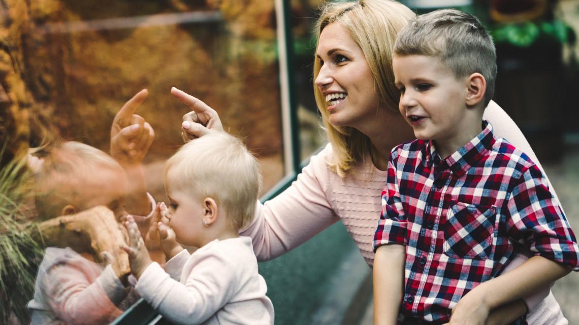 Nem állt meg az élet Debrecenben: újabb cukiság született az állatkertben + FOTÓ