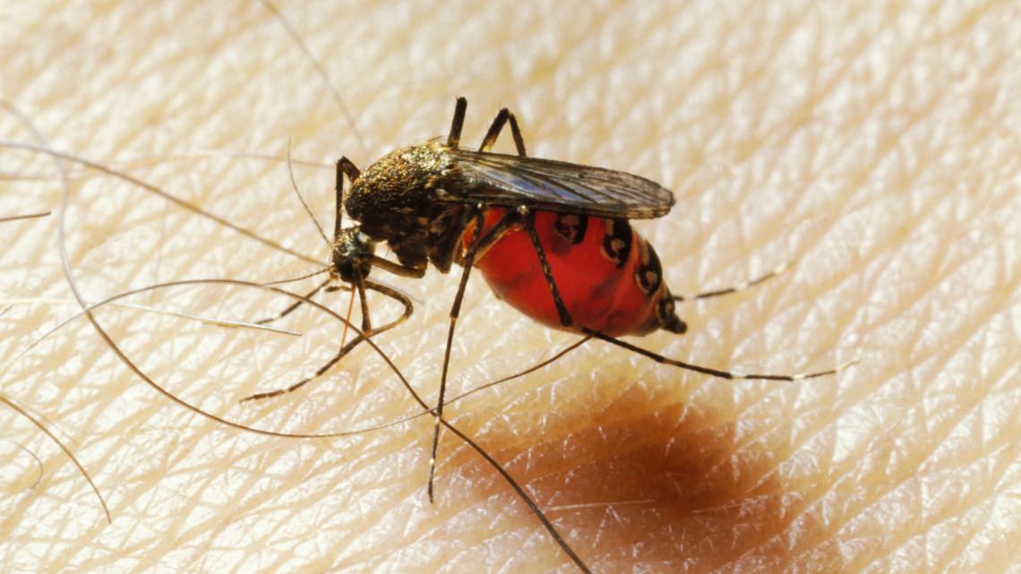 Viszlát vérszívók: elrendelték az első balatoni szúnyoggyérítést