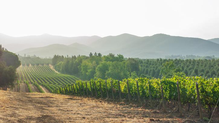 Átjárhatnak a gazdák a magyar-horvát határon: művelni kell a muraközi szőlőket