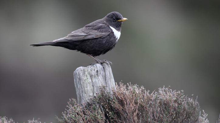 Különleges madarat észleltek Mátraalján: ritkán kerül szem elé ez a faj