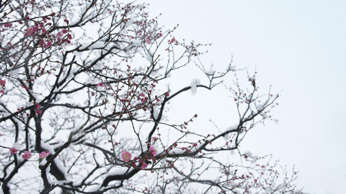 Egy kis vidámság: így védik a gyümölcsfákat a balatonvilágosiak + FOTÓK