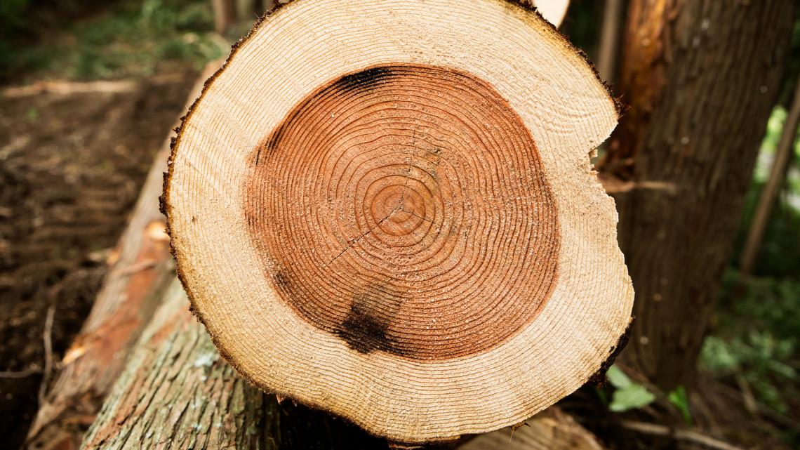 Durva problémákkal küzdenek az erdőgazdálkodók: ez lehet a megoldás a bajra