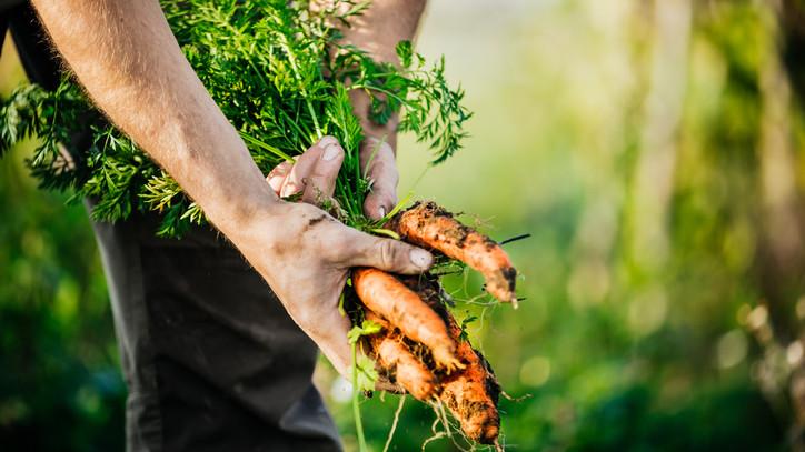 Ezek a leggyorsabban növekvő zöldségek: mutatjuk, mit ültess a gyors szüret reményében