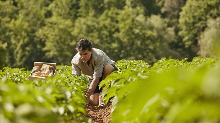 Jól teljesített a magyar agrárium 2020-ban: megugrották a gazdák a járvány okozta akadályokat