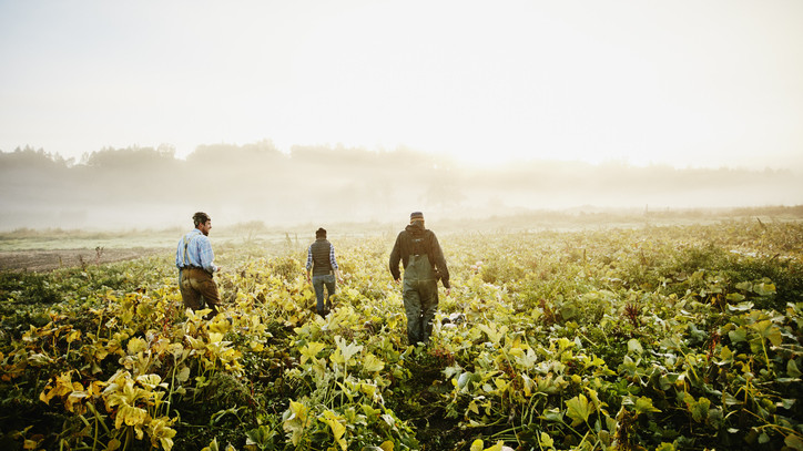 Gyorsan alkalmazkodnak a gazdák: megkezdődött az egységes kérelmek beadása